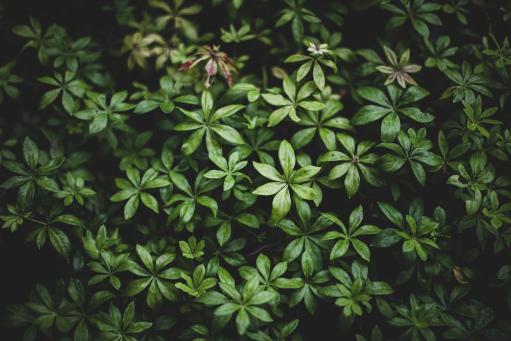 green leaves plant in close up photography