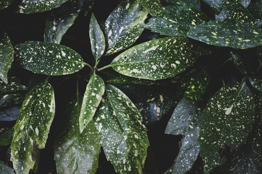 water droplets on green leaves