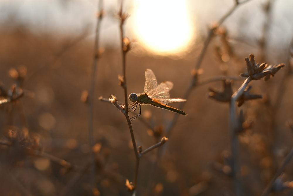 brown and black dragonfly perched on brown stem in tilt shift lens