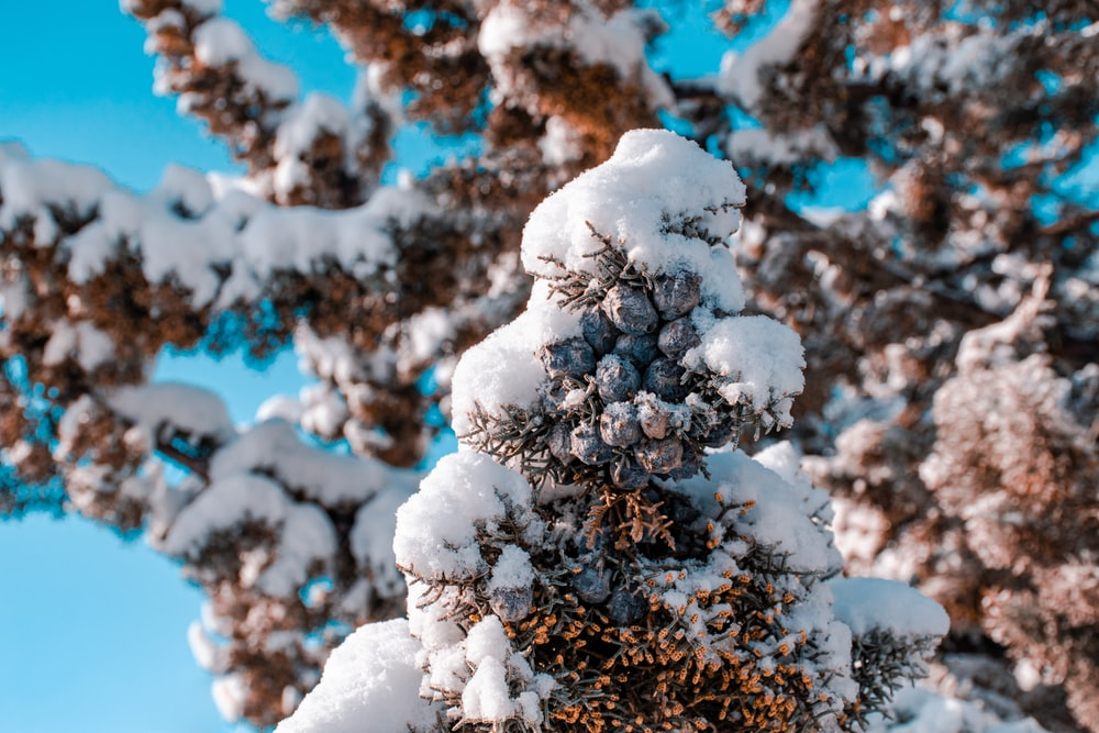 white snow on tree branch
