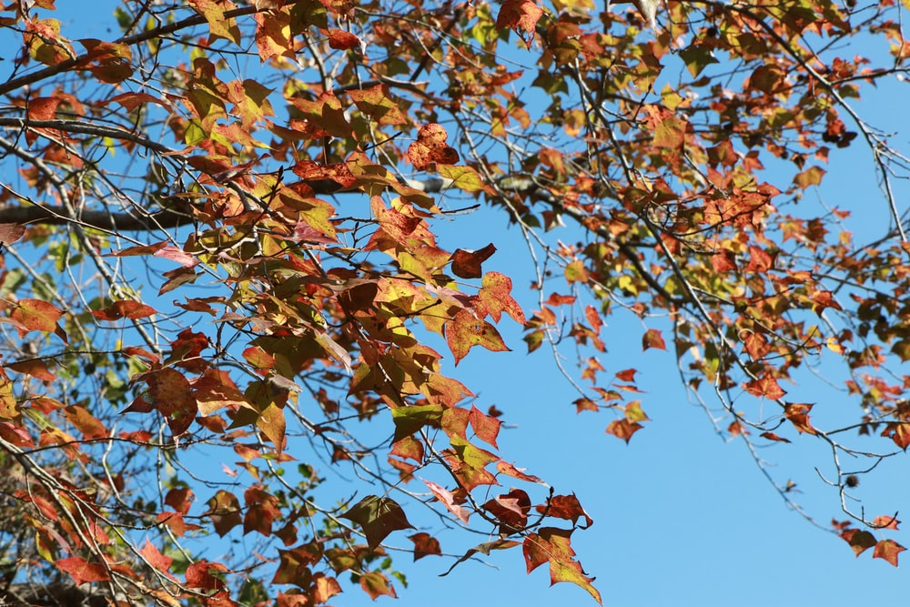 brown and green leaves tree under blue sky during daytime