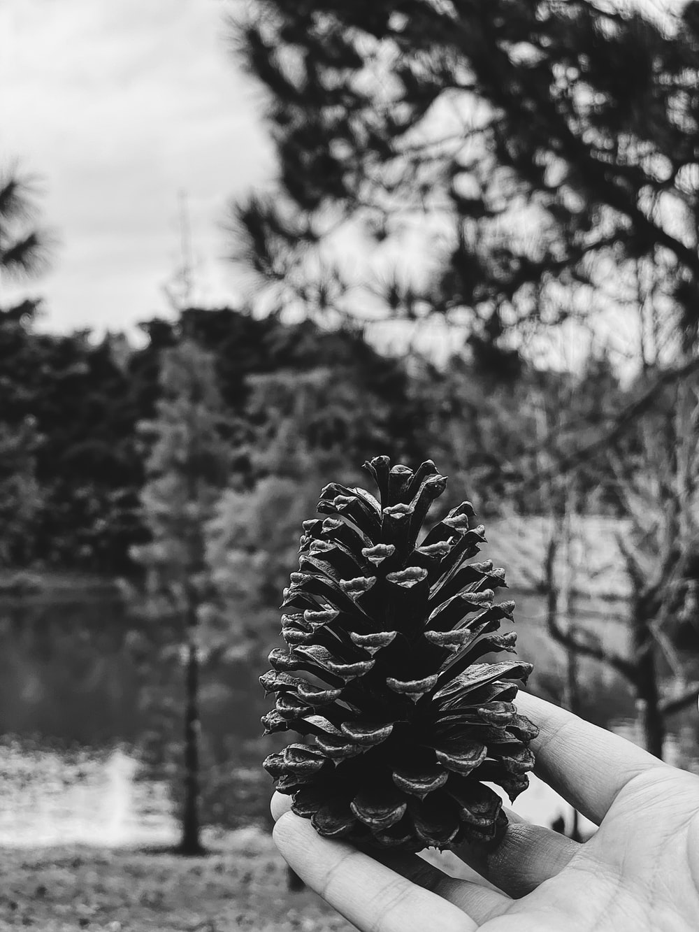 grayscale photo of person holding pine cone