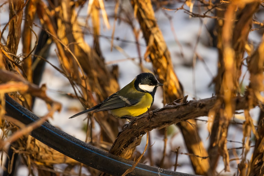 black and yellow bird on brown tree branch during daytime