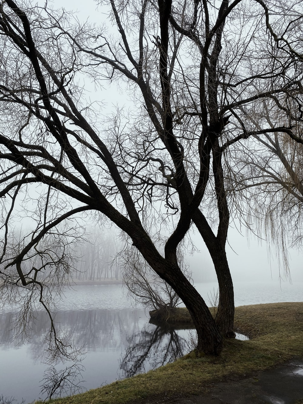 leafless tree near body of water during daytime