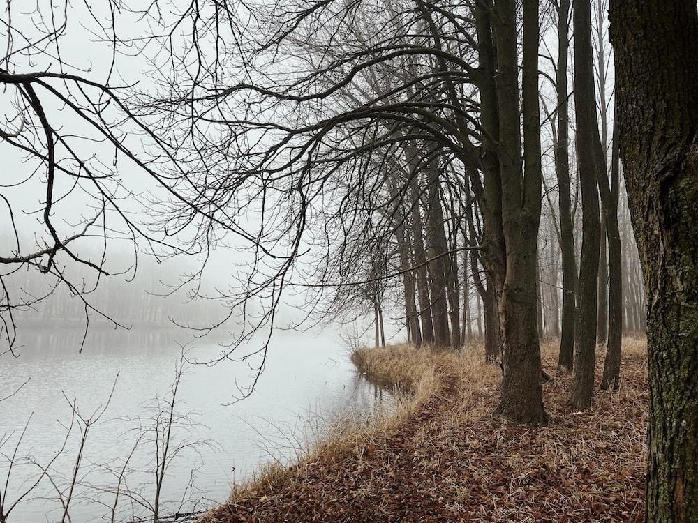 brown leafless trees near lake during daytime