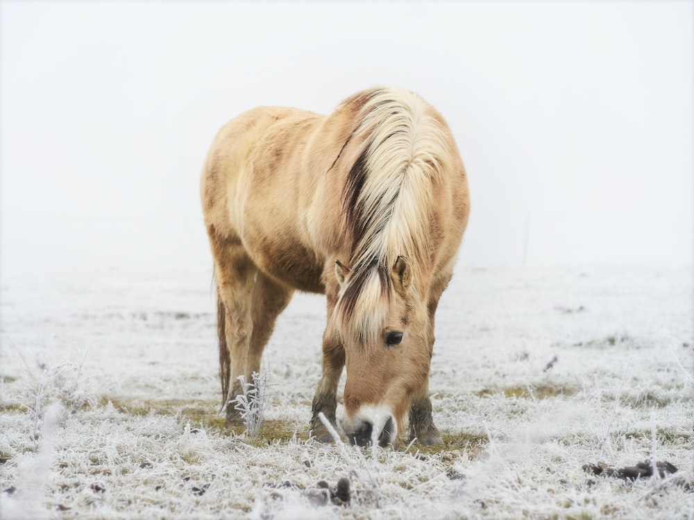 brown horse on white snow covered ground during daytime