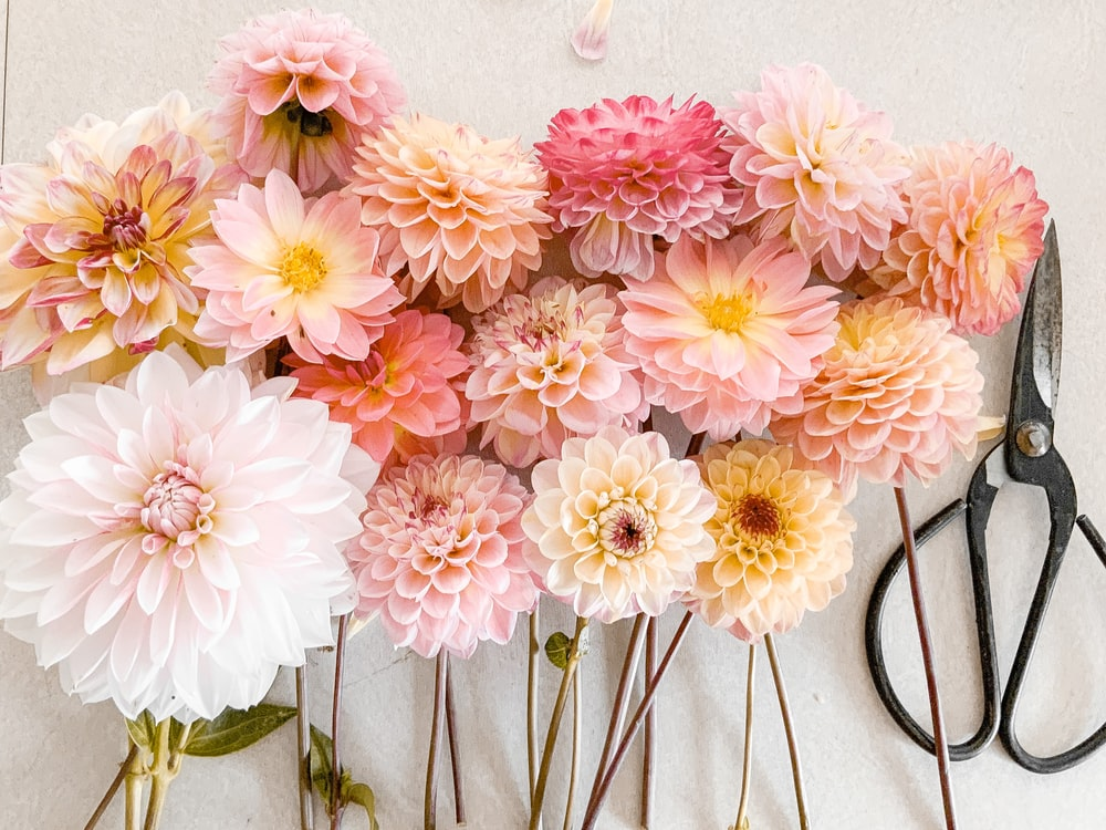 pink and white flowers on white wall