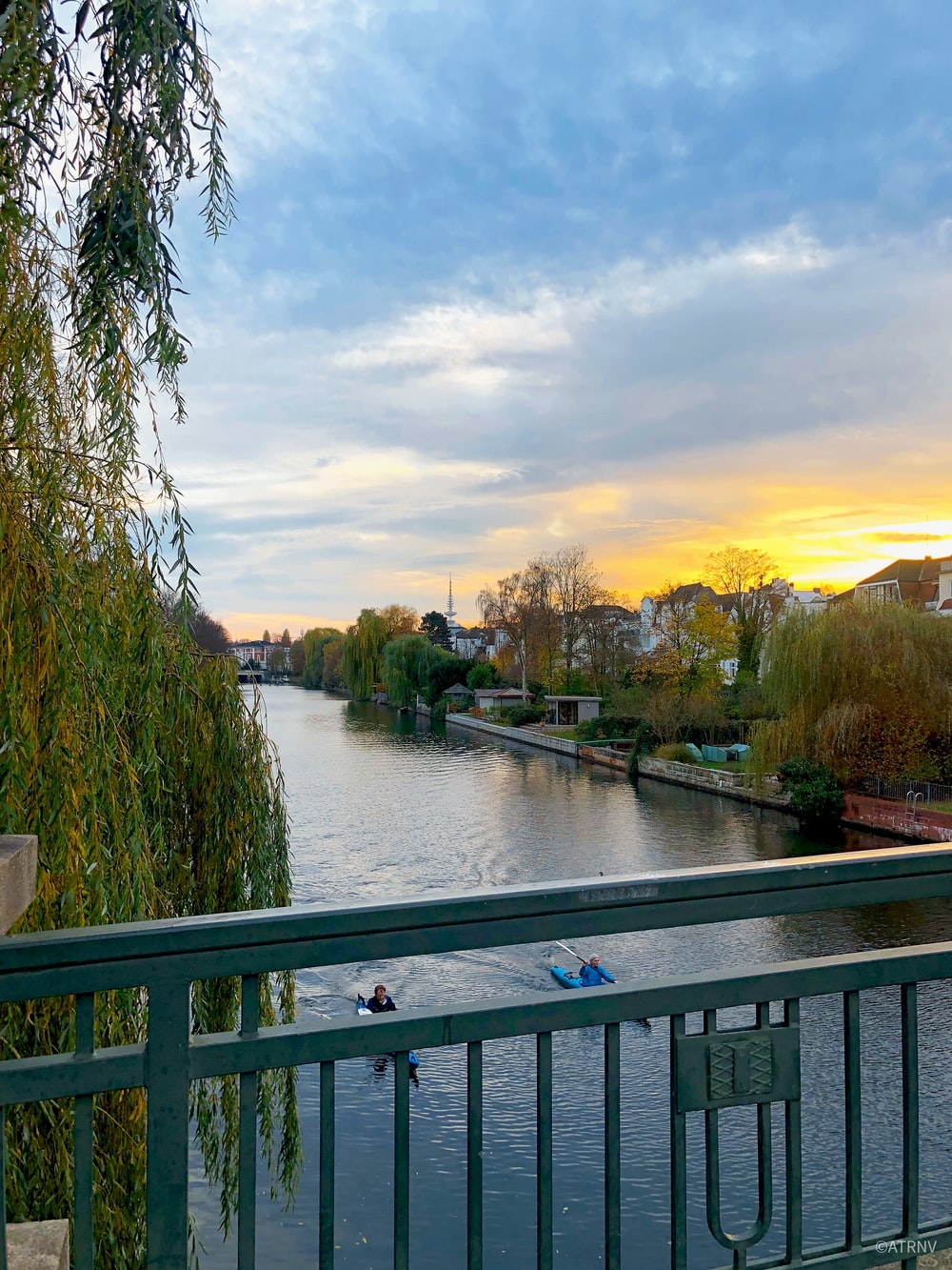 green trees beside river during sunset
