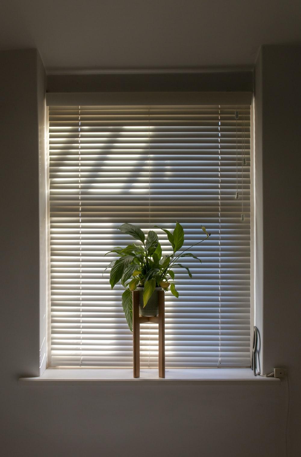 green plant in pot beside window blinds