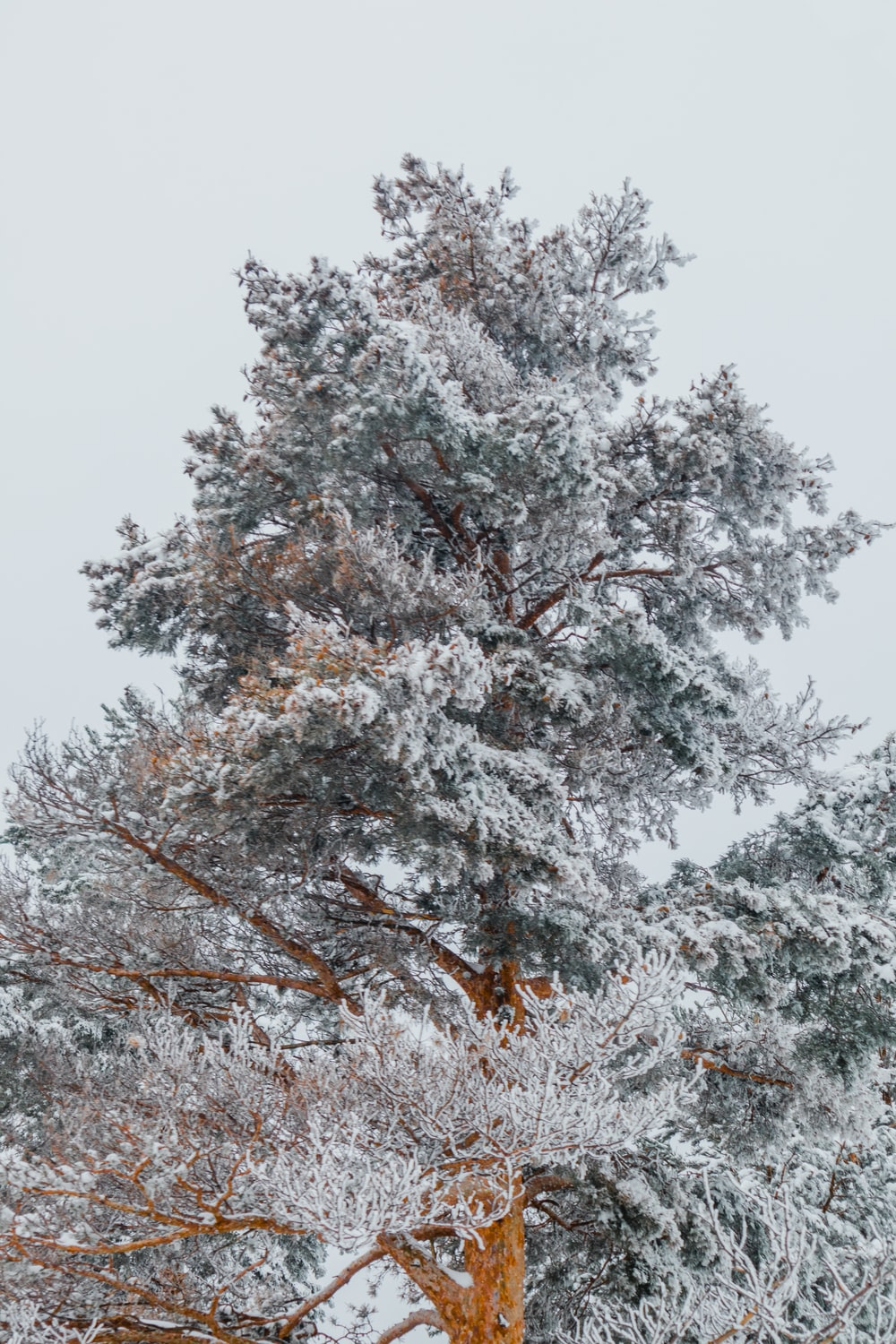 brown tree covered with snow