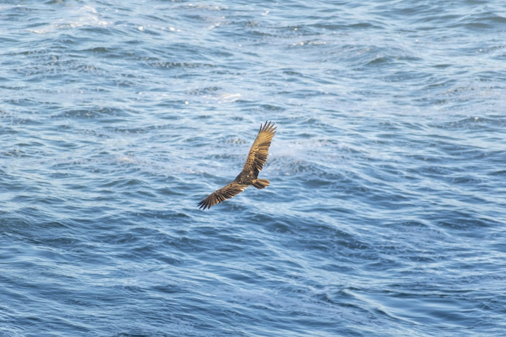 brown bird flying over the sea during daytime
