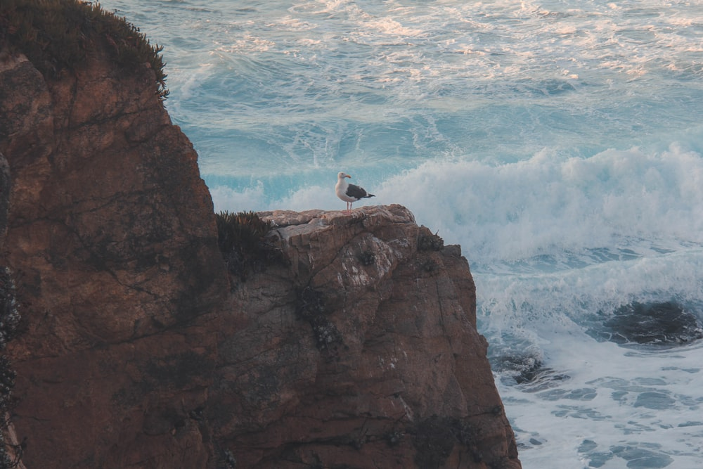 white bird on brown rock formation near body of water during daytime