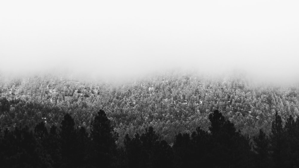 grayscale photo of trees and fog