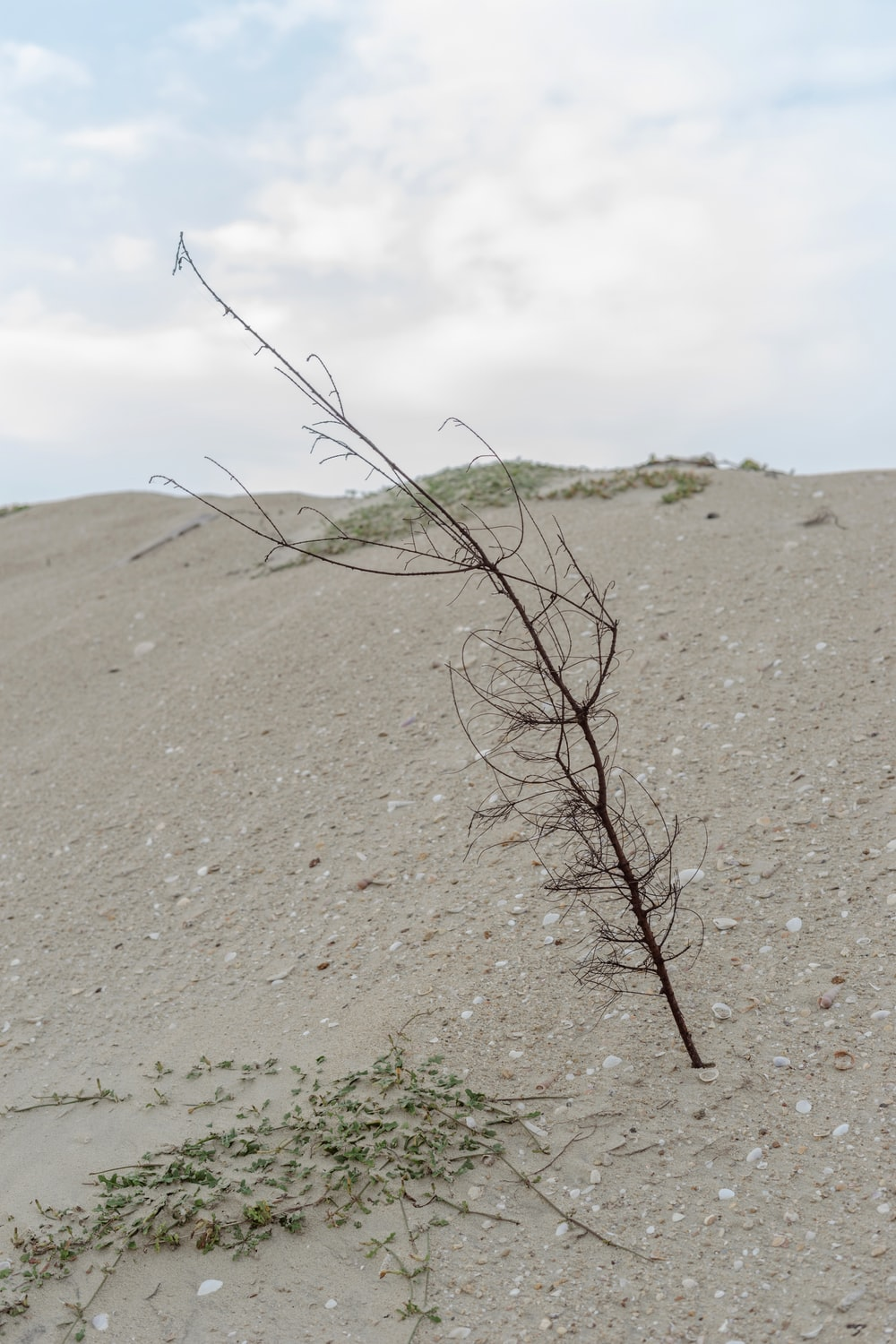 brown leafless tree on white sand