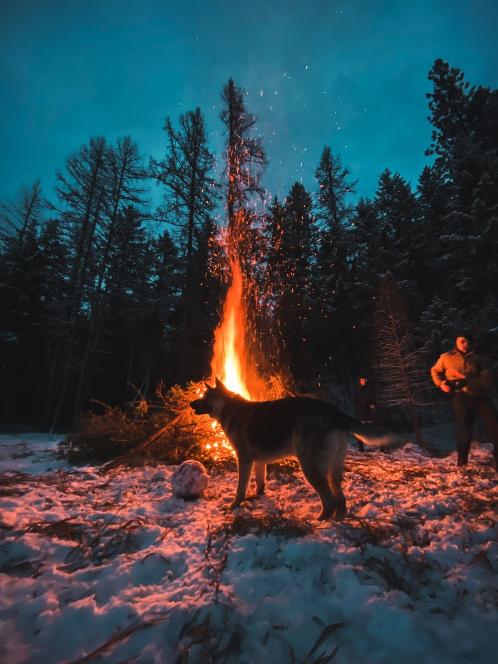 people sitting on ground near bonfire during night time
