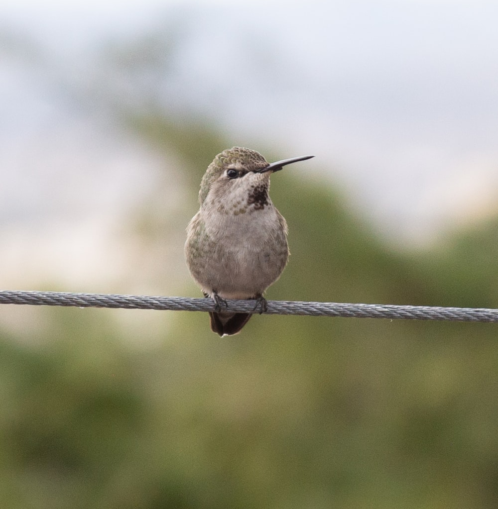 white and brown bird on black wire during daytime