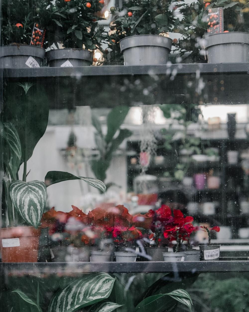red flowers in clear glass window