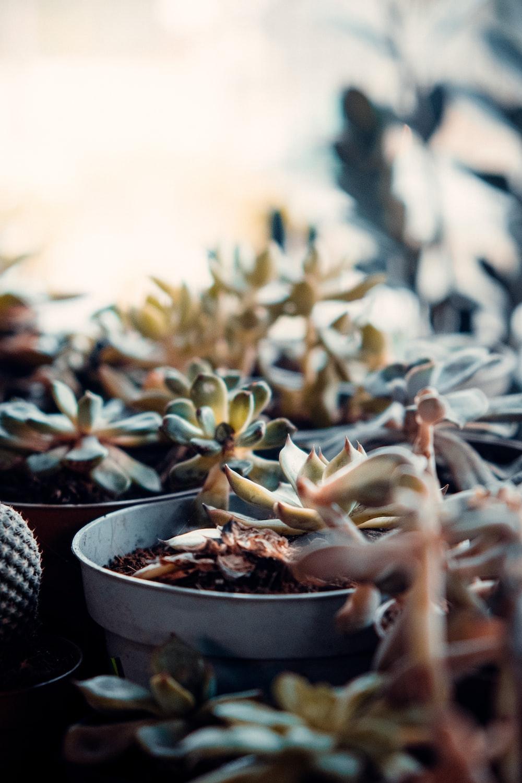 white and green plant on white ceramic pot