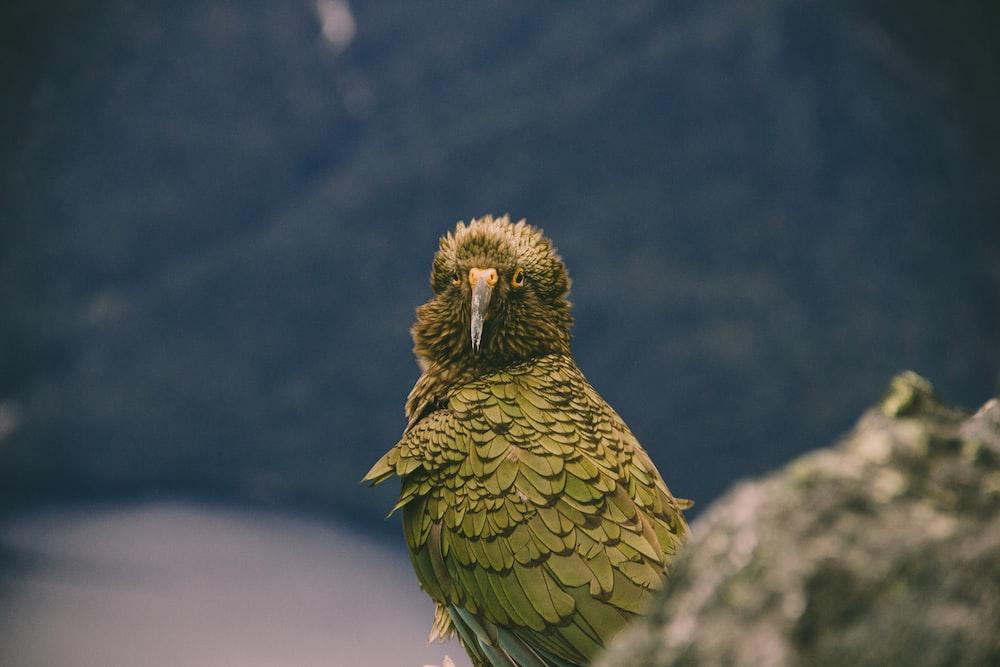 green bird on gray rock
