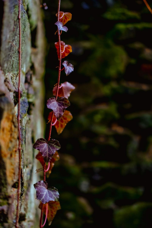 red and purple flower in tilt shift lens