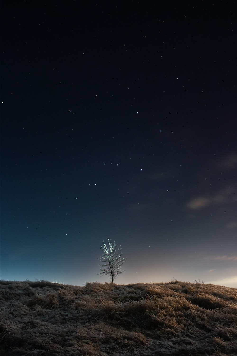 green tree on brown field under blue sky during night time