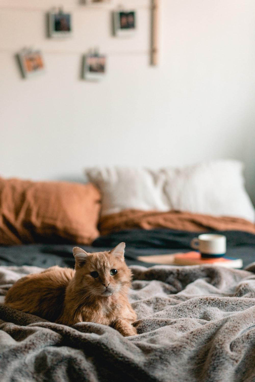 orange tabby cat lying on bed