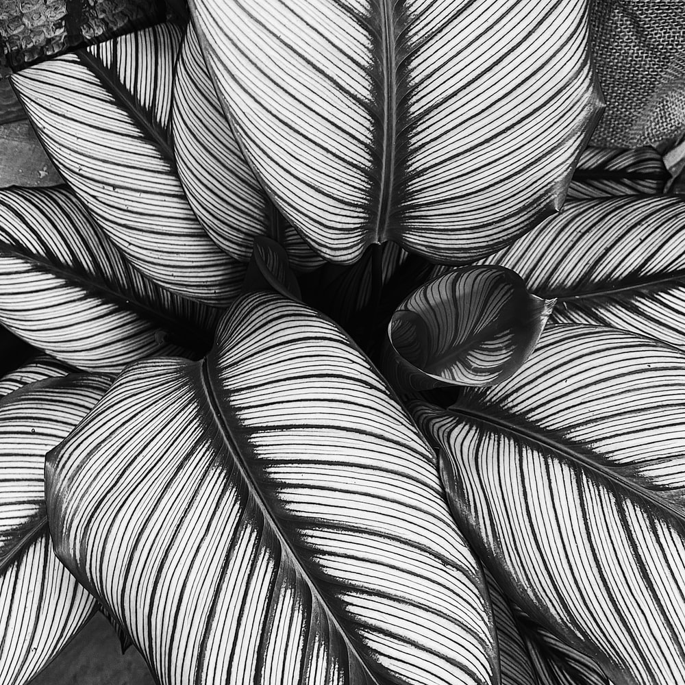 grayscale photo of leaves on wooden surface