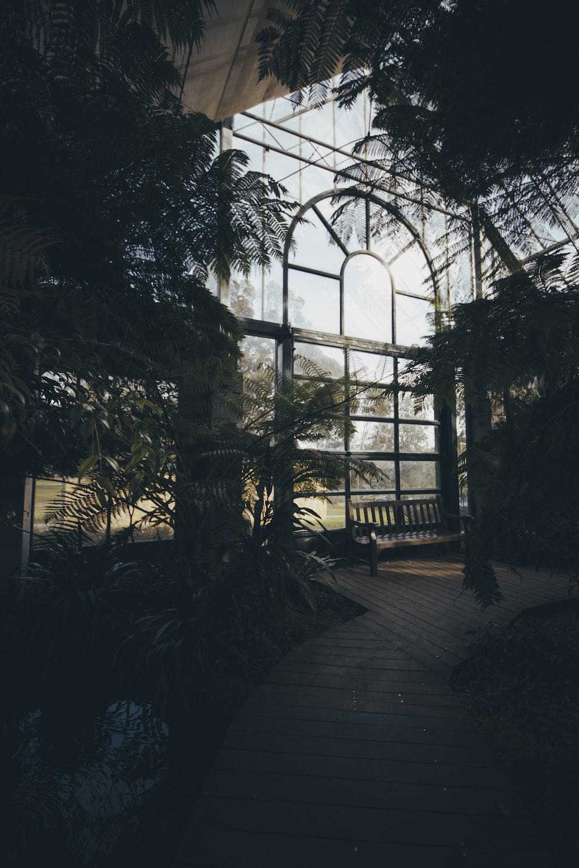 green leaf plants inside building