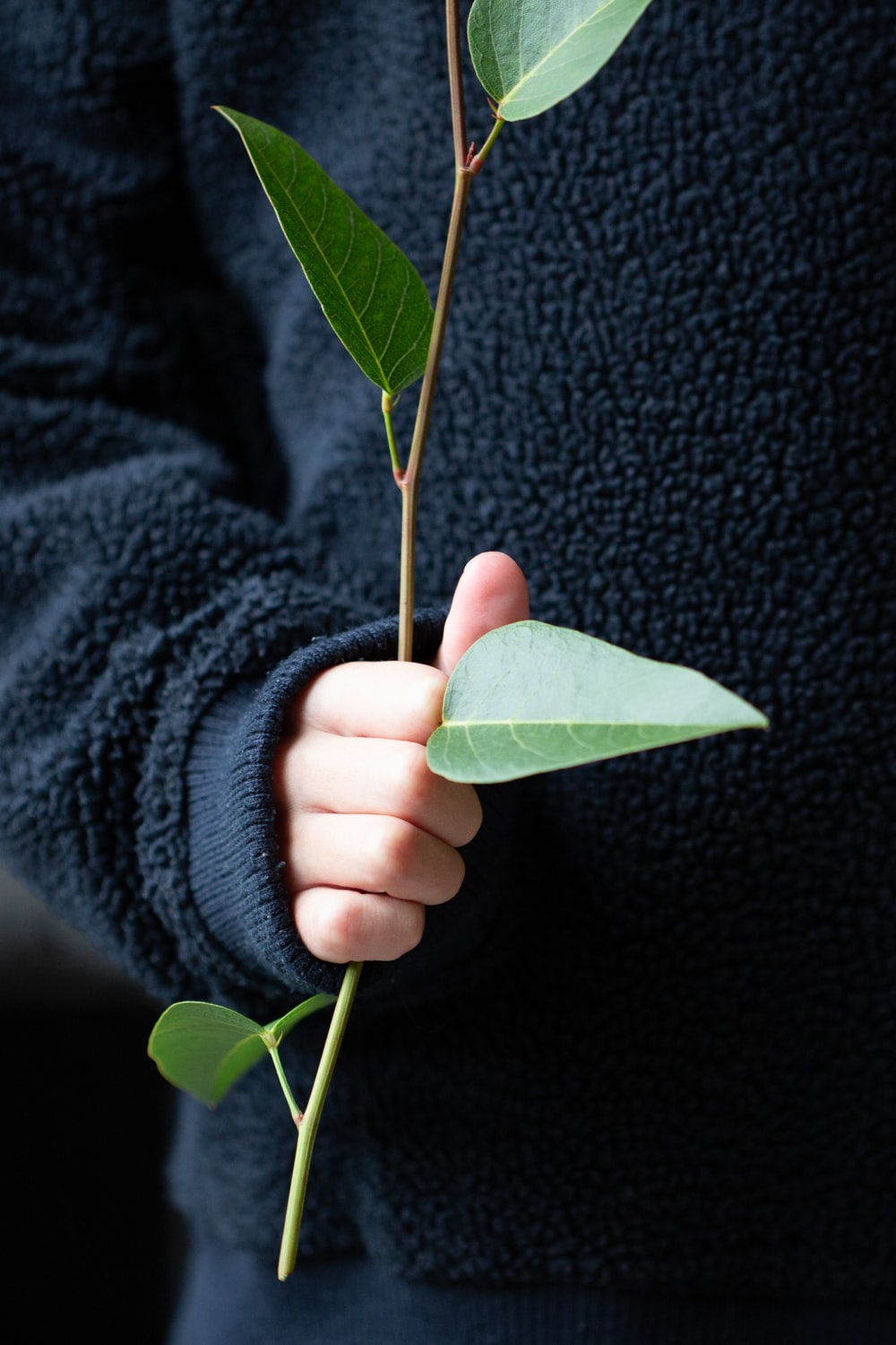 person holding green leaf on black textile