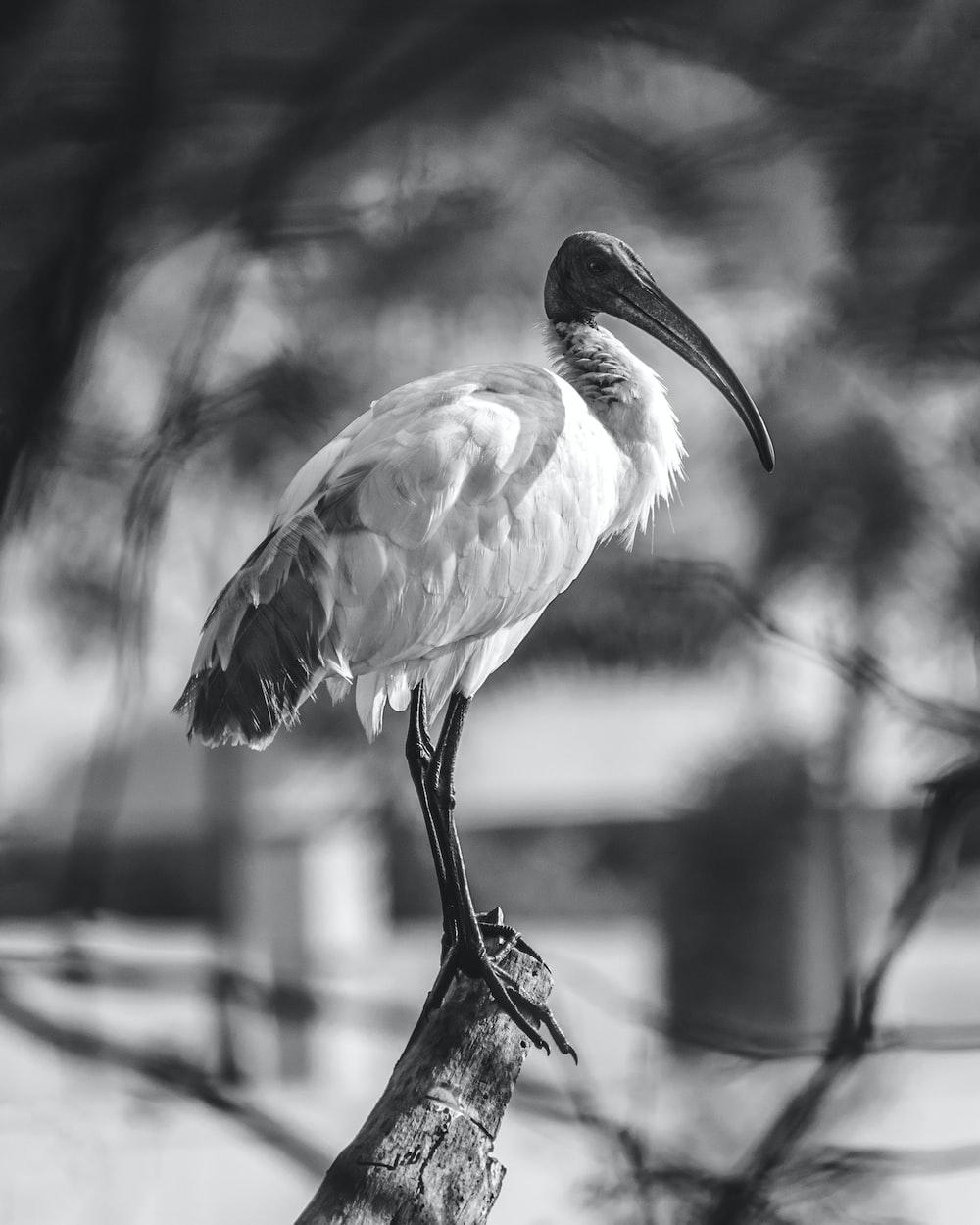 grayscale photo of a bird