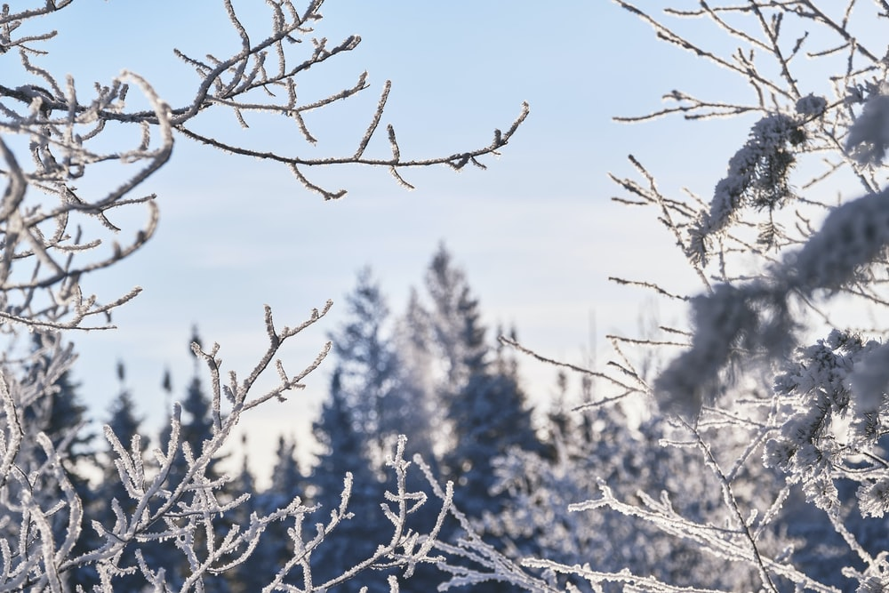 brown tree branch covered with snow during daytime