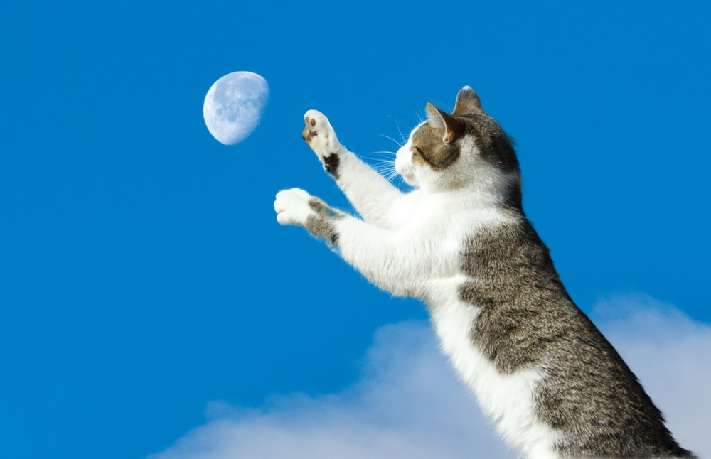 white and black cat under blue sky