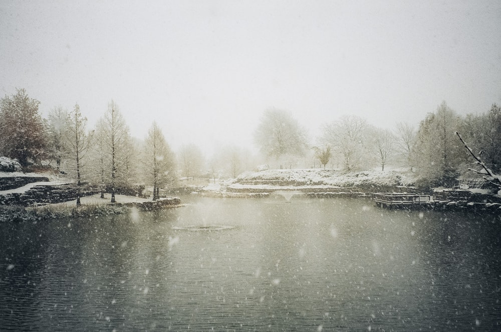 snow covered trees beside river during daytime
