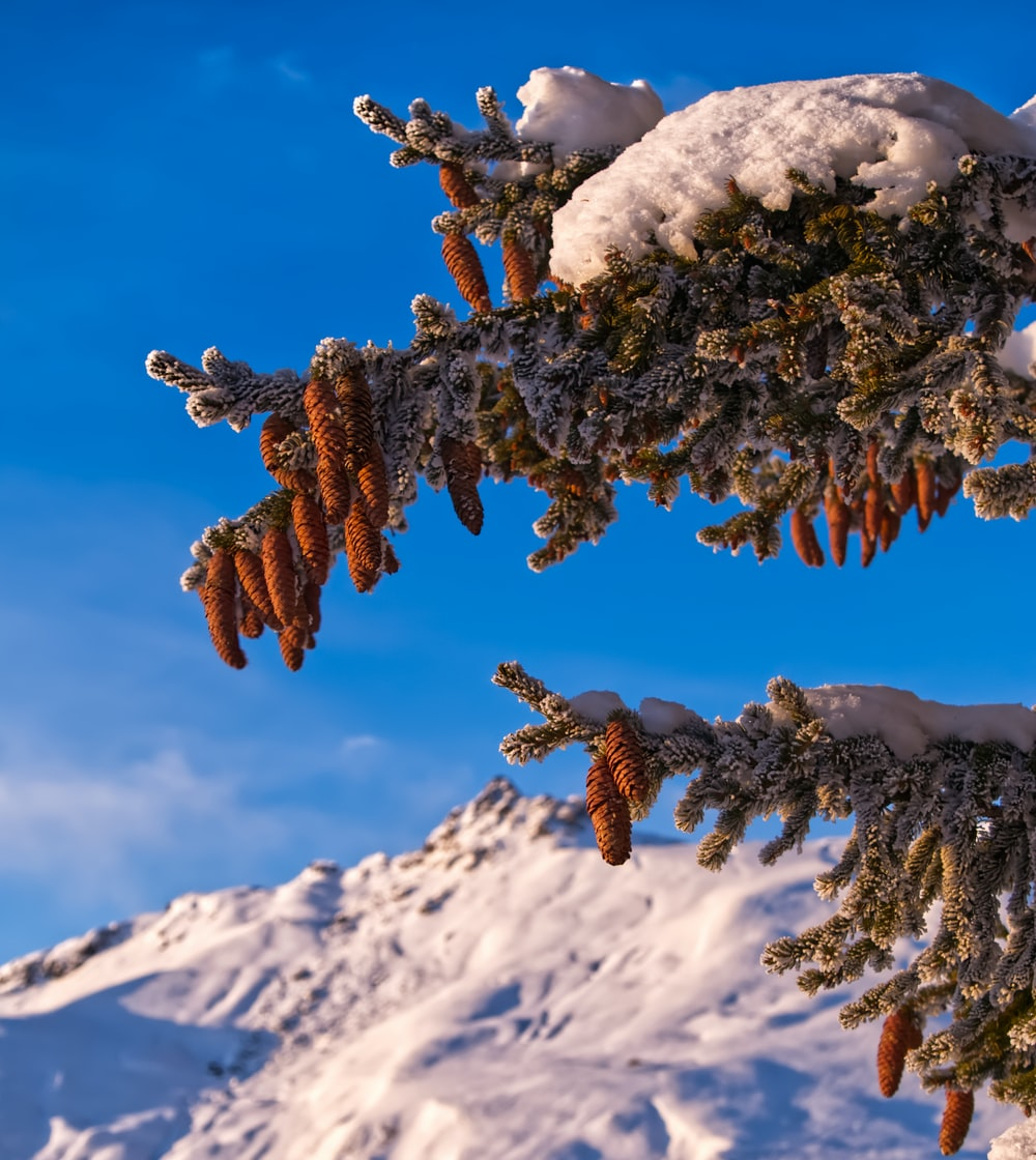 brown dried leaves on snow covered mountain during daytime