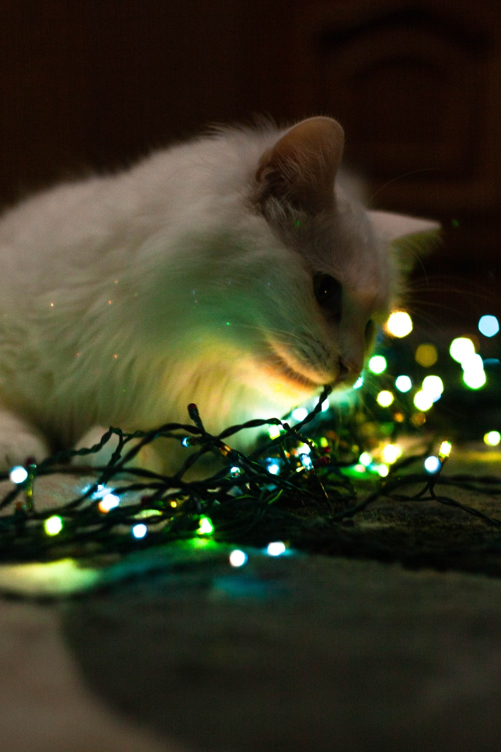 white cat on green string lights