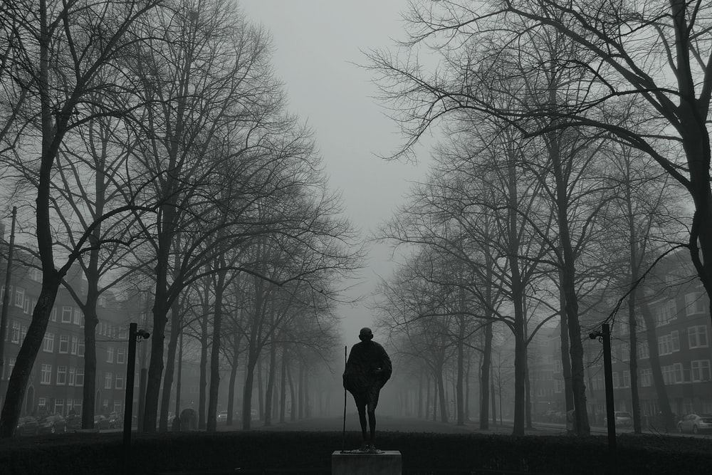man in black jacket standing on pathway between bare trees