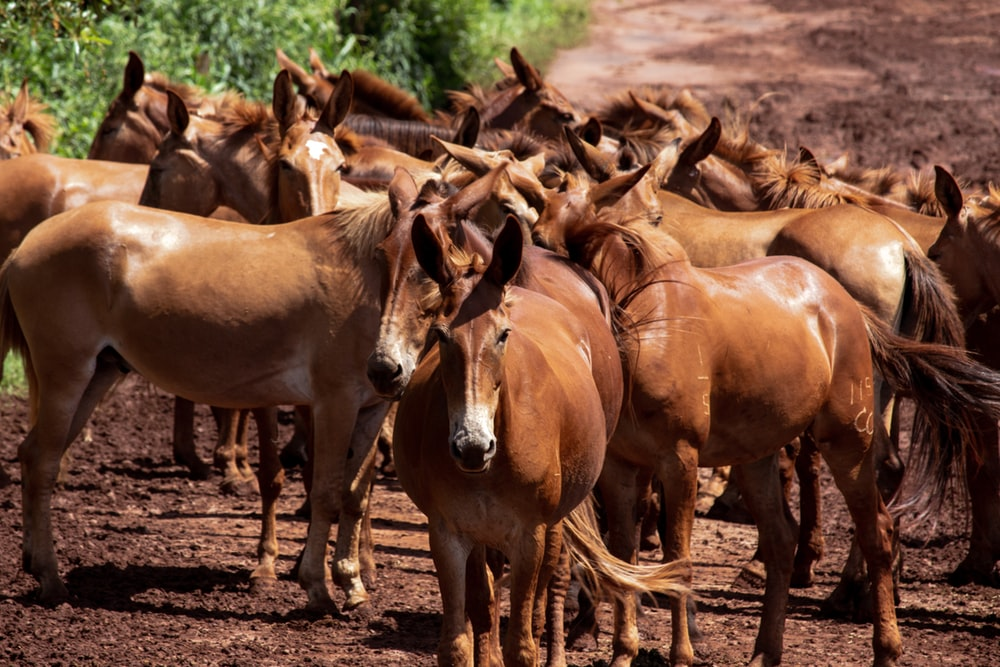 brown horses on brown soil during daytime