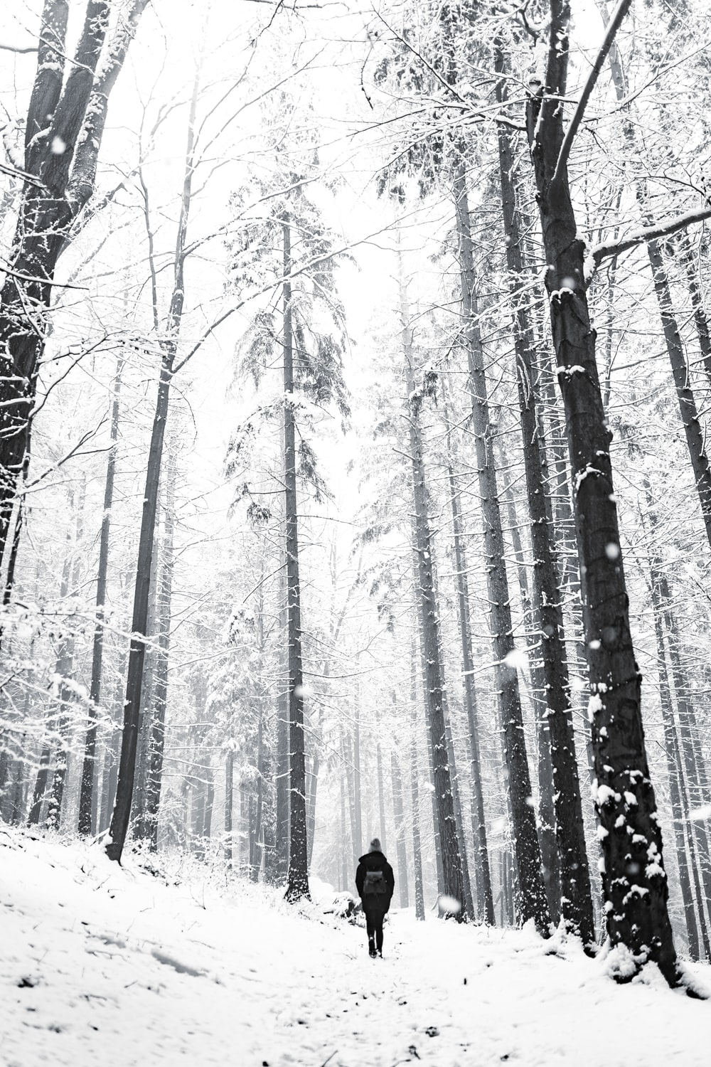 person in black jacket standing on snow covered ground in forest during daytime