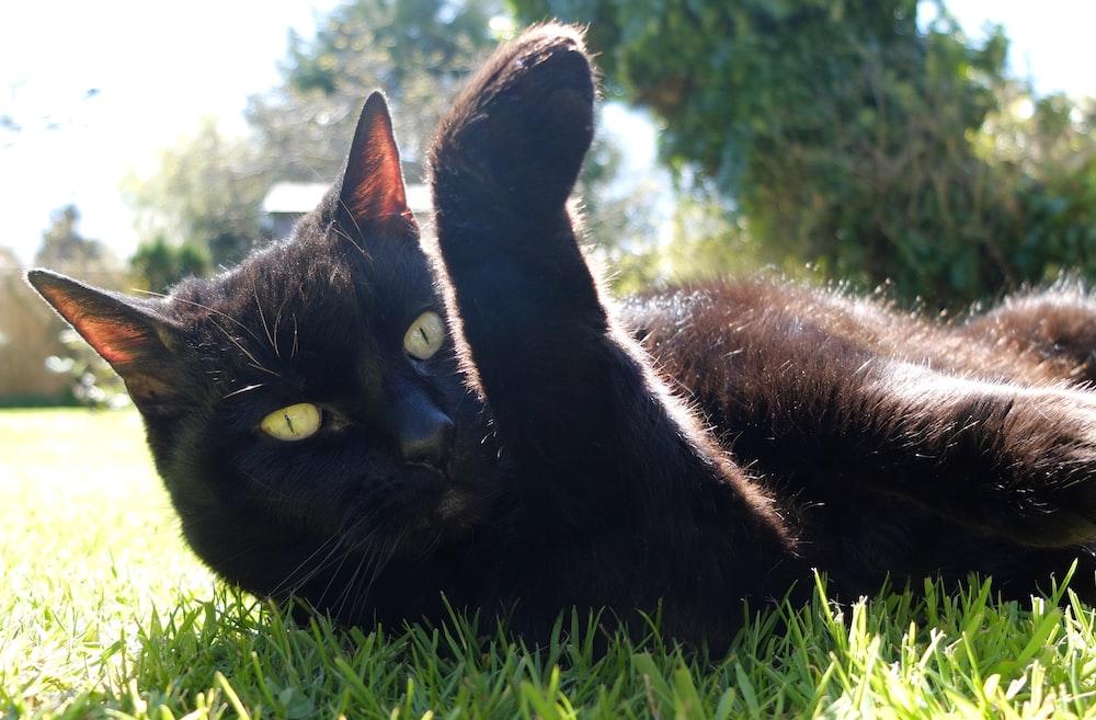 black cat lying on green grass during daytime