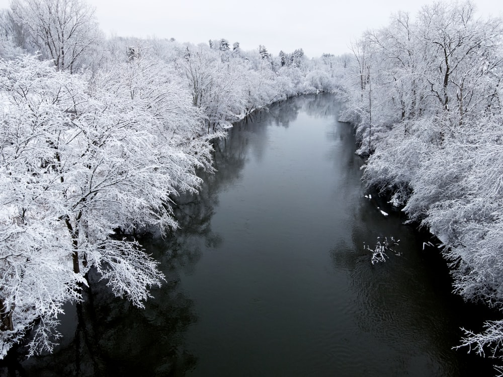 white trees covered by snow near river during daytime