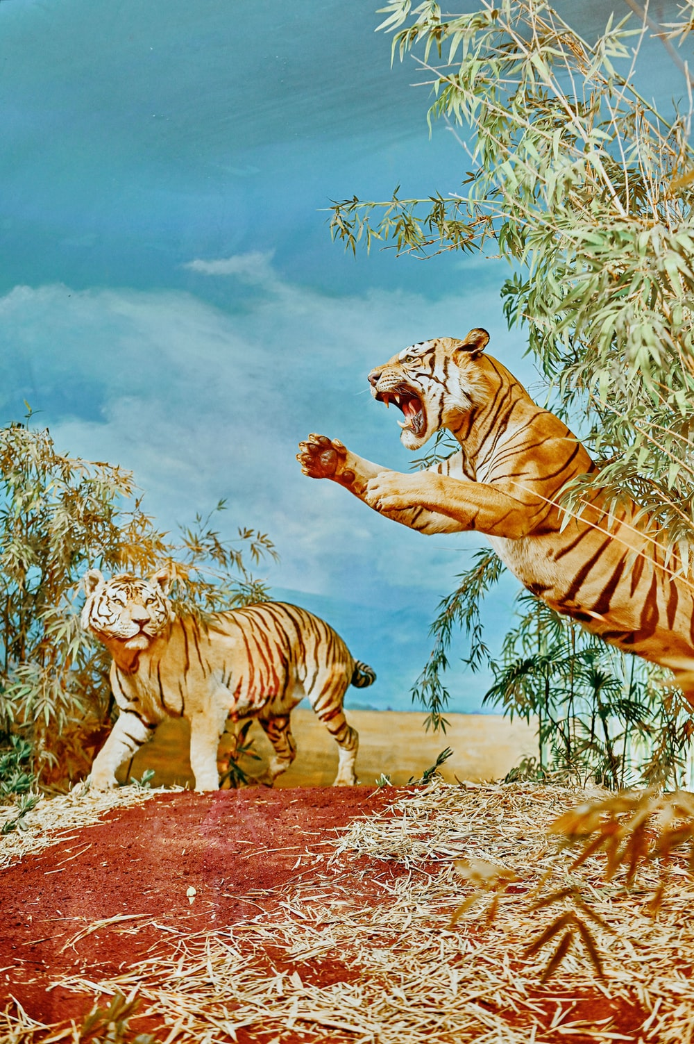tiger and tiger on snow covered ground painting
