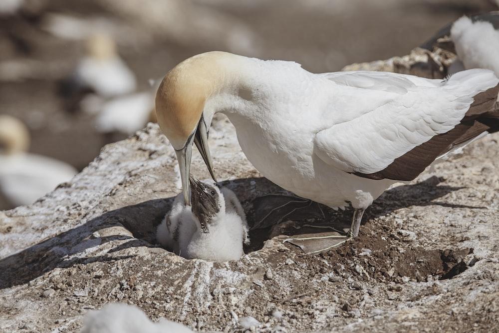 white bird on brown soil during daytime
