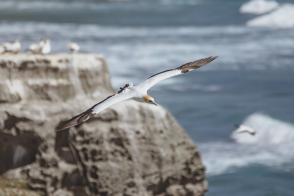 white and brown bird flying over the sea during daytime