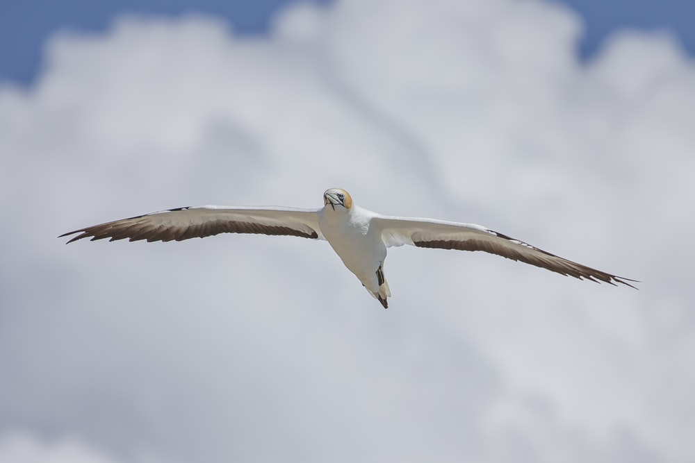 white and brown bird flying under white clouds during daytime
