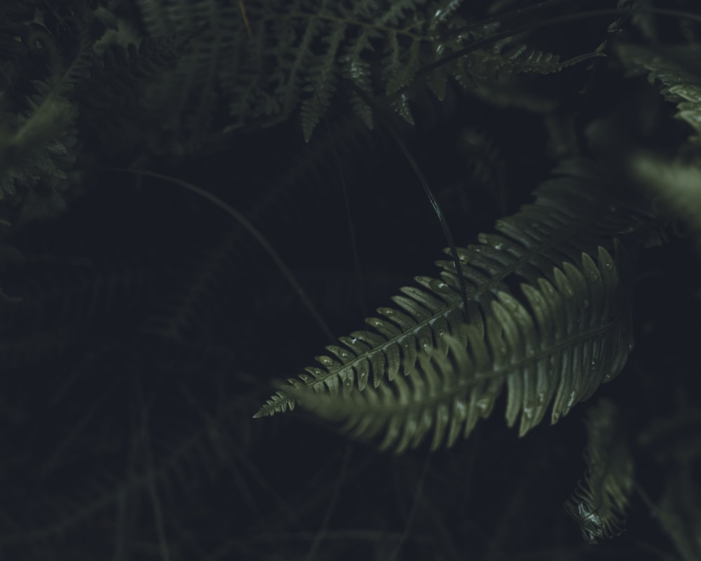 green fern plant during night time