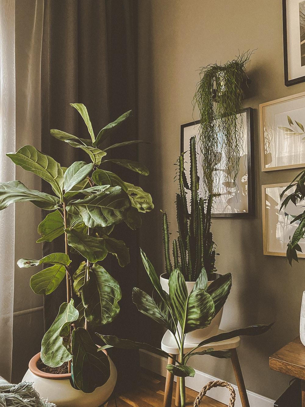 green indoor plant near black framed mirror