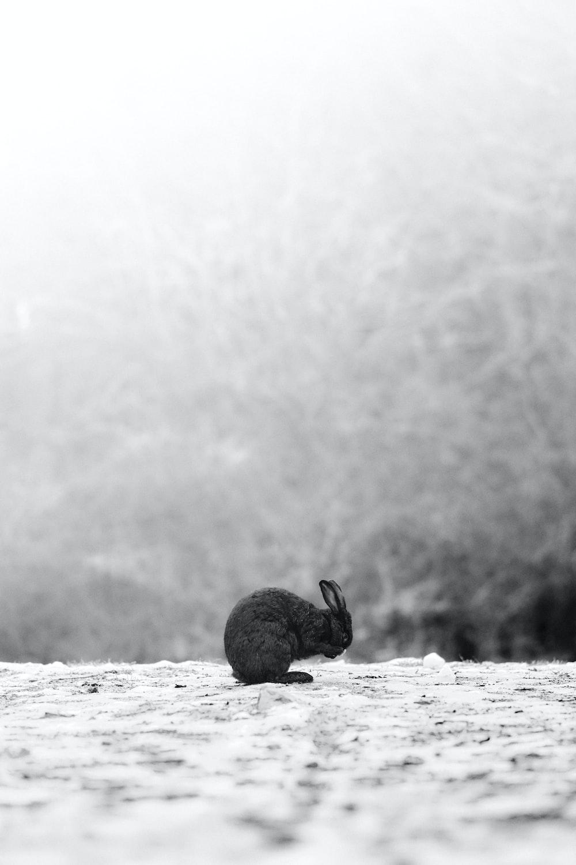 grayscale photo of rabbit on beach