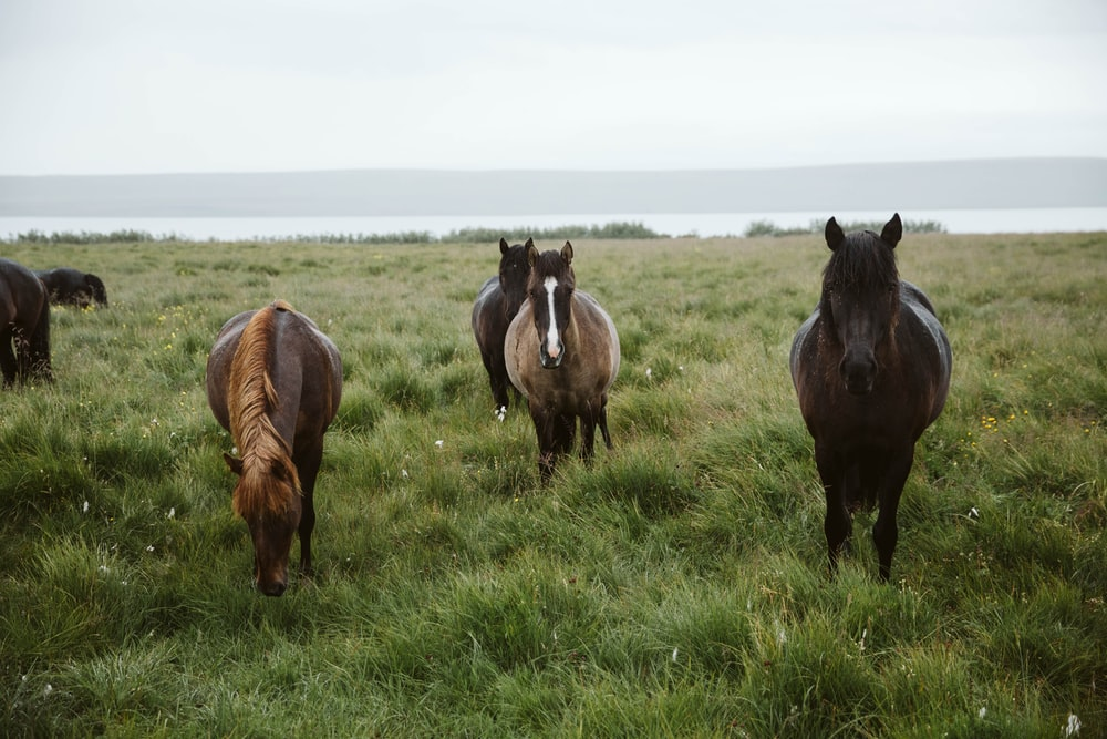three horses on green grass field during daytime