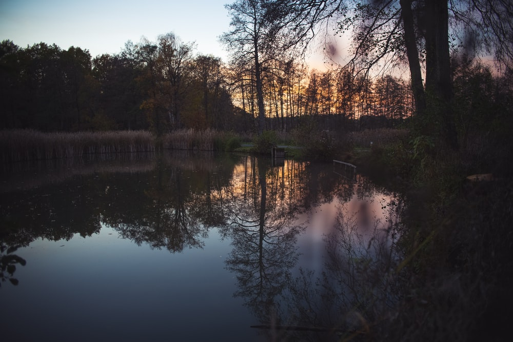 body of water near trees during sunset