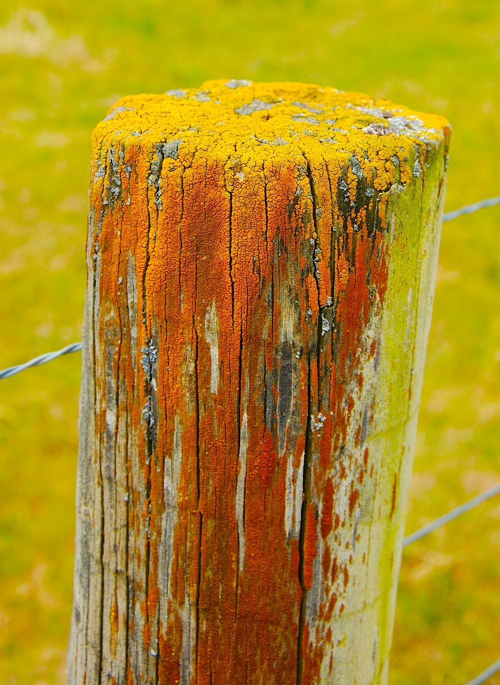 brown wooden post with black wire